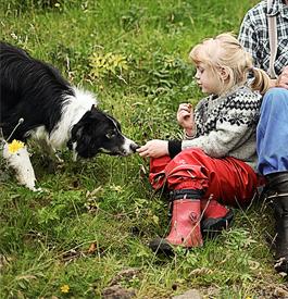 Tryggja tín hund við lógarkravdari ábyrgdartrygging og lívstrygging